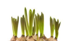 forced bulbs inhabitat green design innovation architecture
