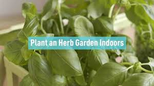 100 garden indoors 79 best h u0026g kamerplanten images on