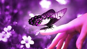 the love wallpapers the love of a butterfly hd purple wallpaper