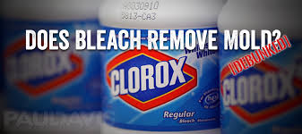 bleach bleach kills mold debunked freshstart restoration