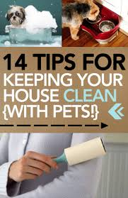 14 tips for keeping your house clean with pets