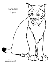 100 ideas canadian animals coloring pages on halloweencolor us