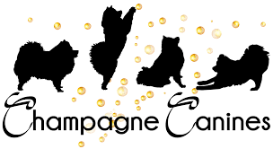 champagne silhouette png home page champagne canines