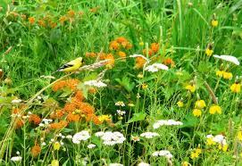 bird friendly native plants audubon annual native plant sale u0026 pick up audubon greenwich