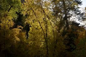 light in leaves