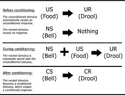 pavlovian conditioning pavlov 512 behaviourism