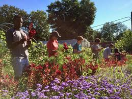 Botanical Garden Internship Summer Internship Yale Sustainable Food Program