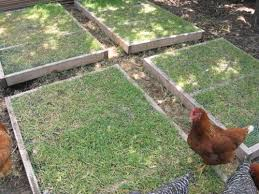 How To Drill Your Own Well In Your Backyard by Free Grazing Frame Plans For Backyard Chickens Coop Thoughts Blog