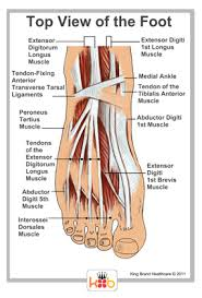 Foot Ligament Anatomy King Brand Ankle Images