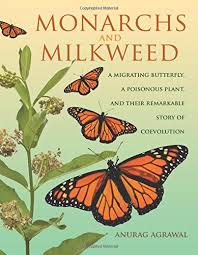 monarchs and milkweed a migrating butterfly a poisonous plant