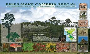 Map Of Cambria Ca Cambria Pine Forest Sign Cambria Forest Committee