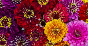 flower blooming free stock video of bloom blossom flora