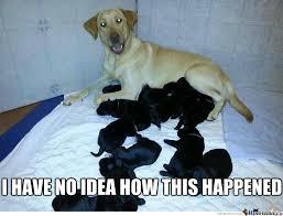 Confused Dog Meme - i m so confused by jordanjamesfawcett meme center