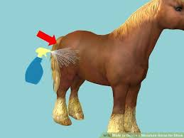 hairstyles for horses how to groom a miniature horse for show with pictures wikihow