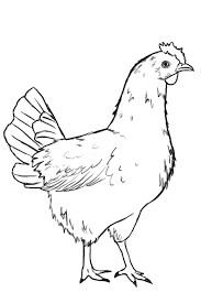 how to draw a chicken draw central