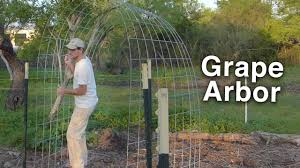 Arbors And Trellises Building The Grape Arbor Trellis Cattle Panels And T Posts Youtube
