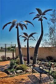 ornamental palm trees solar innovationssolar innovations