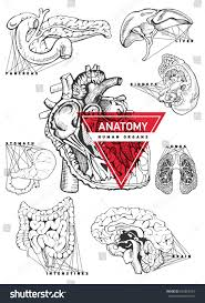 Anatomy Of Stomach And Intestines Human Organ Anatomy Set Hand Drawing Stock Vector 339869261