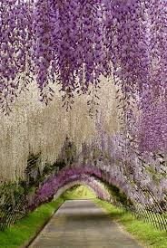 world famous flower gardens 14 breathtaking photos tesselaar