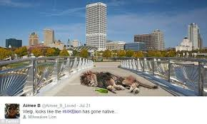 Milwaukee Meme - internet pokes fun at reports that a lion is prowling the milwaukee