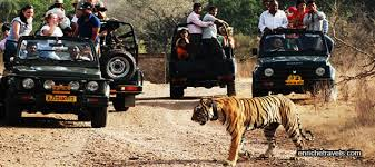 wildlife tours images Wildlife tours in india tigers in india wildlife tour packages in jpg