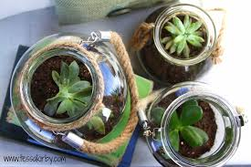 how to build your own succulent terrariums tessa kirby blog