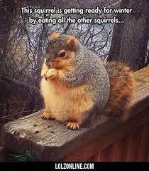 Squirrel Meme - image result for fat squirrel meme all animals pinterest fat