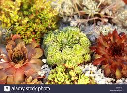 garden flora rock gardening vegetation landscaping extensive plant