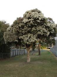 small trees 30 for a small yard or garden dengarden
