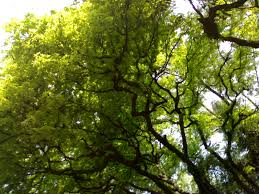 trees swirlsfromthebowlofchina