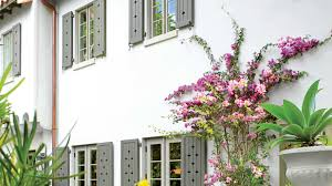 how to grow bougainvilleas southern living