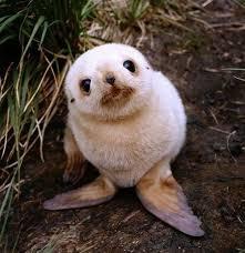 30 baby animals u0027aww u0027 bored panda