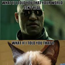 Morpheus Cat Meme - grumpy cat hatin on morpheus by bwk279 meme center