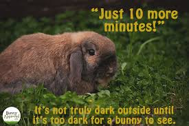 Bunny Meme - bunny memes bunny approved house rabbit toys snacks and