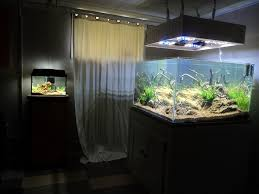 Aquascaping Techniques Layouts By Shany Aquascaping Aquarium Techniques Pinterest