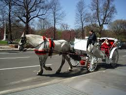 Massachusetts how far can a horse travel in a day images 10 romantic things to do in boston valentine 39 s day 2017 more jpg