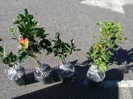native plant nurseries perth forum shipping syndicate of plants to perth wa