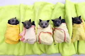 bats for sale these baby bats are just so adorable