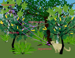 Plants In The Tropical Rain Forest - tropical rainforest food web science project education com