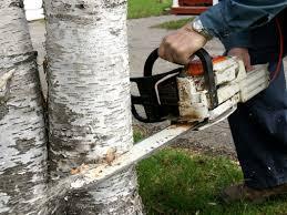tree removal services deposit ny budine tree service