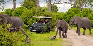 african jeep south africa safari south africa adventure cape town kruger