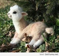 Autocorrect Meme - baby alpaca funny pictures funny quotes funny memes funny pics