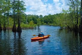 Florida lakes images Dead lakes recreation area florida hikes jpg
