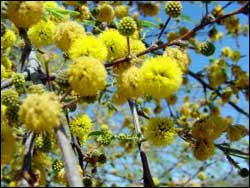 plants for the arizona desert town of gilbert arizona