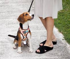 5 things every beagle puppy should have mama life to two littles