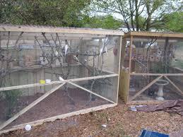 bird aviary chat thread backyard chickens