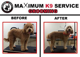 how to cut a goldendoodles hair goldendoodle grooming and goldendoodle care long island ny