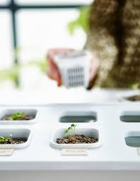 adventures in indoor gardening part 2