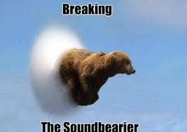Funny Bear Memes - bear puns funny bear memes