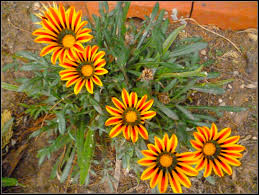 Fowers Flower Orange Simplicity Garden Flowers Hardy Beauty Fowers